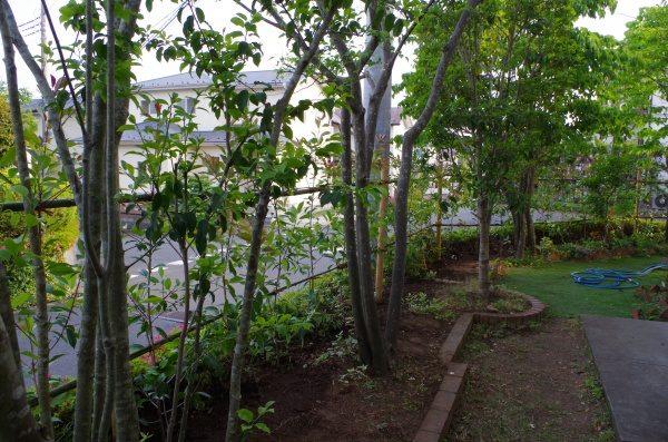 ベニカナメ植栽工事